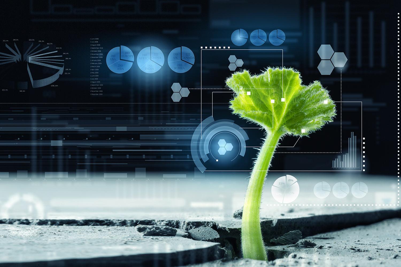 Evergreen Nutrición Vegetal - Fertilizantes y Bioestimulantes
