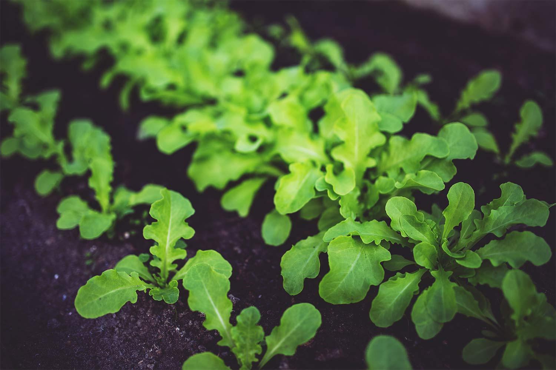 Evergreen Nutrición Vegetal - Fertilizantes y Bioestimulantes Empresa Almería España